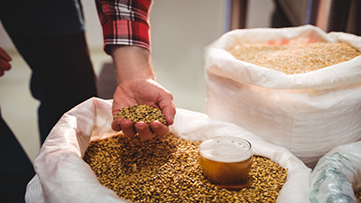Curso de Introducción a la fabricación de cerveza